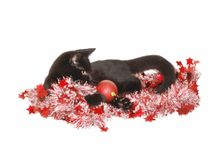 Christmas Kitty. Cute black kitten surrounded by christmas decorations Stock Image