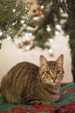 Christmas Kitty Stock Images