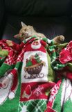 Christmas kitty. Kitten asleep under a Christmas blanket stock photo