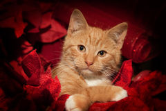 Christmas Kitty Royalty Free Stock Photography