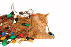 Christmas kitty tangled in retro lights Royalty Free Stock Photo