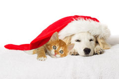 Christmas labrador puppy and kitten. Sleeping Stock Images