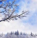 Christmas landscape background. Royalty Free Stock Image
