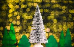 Christmas landscape with fir tree, forest and warm white lights in the background royalty free stock images