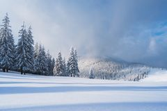 Christmas landscape with spruce in the mountains royalty free stock photography