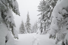 Christmas landscape in forest Stock Photo