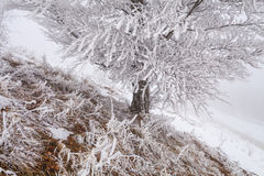 Christmas landscape with snow-covered forest Stock Photos