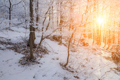 Christmas landscape with snow-covered forest Royalty Free Stock Image