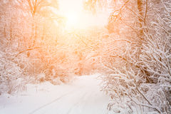 Christmas landscape with snow-covered trees Royalty Free Stock Photography