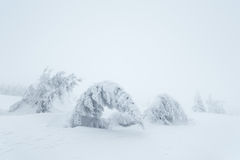 Christmas landscape with snowy trees Royalty Free Stock Photos