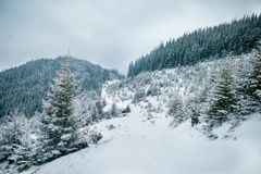 Christmas landscape in the winter mountains stock photo