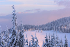 Christmas landscape in the winter mountains at sunset royalty free stock image