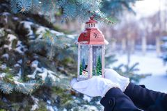 Christmas lantern on fir branch in snow winter day Stock Images