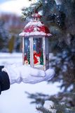 Christmas lantern on fir branch in snow winter day Royalty Free Stock Image