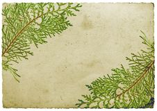 Christmas leaf border Royalty Free Stock Photography