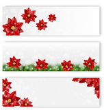 Christmas leaflets with poinsettia Royalty Free Stock Photo