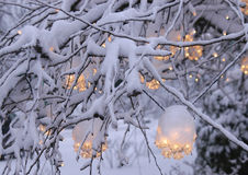 Christmas light 2. Christmas lights in snow covered tree Stock Photo