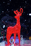 Christmas light decorations like a dreaming world. The Christmas deer light decorations in Stanley Park at Vancouver is as beautiful as in a dreaming world. So Royalty Free Stock Photography