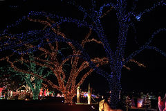 Christmas lighting. On trees in a park Royalty Free Stock Photos
