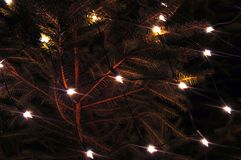 Christmas lights. Lights in christmastree Stock Photography