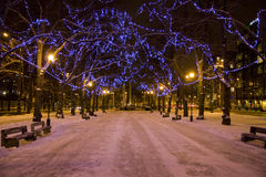 Christmas lights at night in Tallinn, Estonia. Blue christmas lights at night covering branches of alley Stock Image