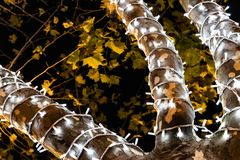 White Christmas lights around the branches of a natural tree royalty free illustration