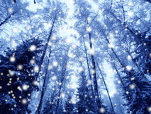 Christmas lights background with snow and snowflakes Stock Images