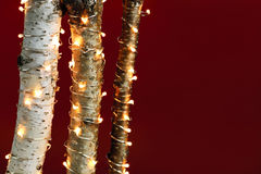 Christmas lights on birch branches Royalty Free Stock Photo