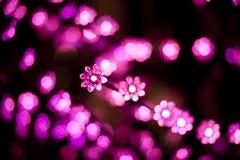 Christmas lights. Blurred Christmas lights on black background. Bokeh effect. Flower shape stock photography