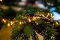 Christmas lights on bough Royalty Free Stock Photography