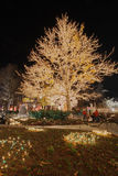 Christmas lights on a cottonwood tree. A cottonwood tree all lit up near temple square in salt lake city stock photos