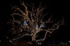 Christmas lights on deciduous tree. Decorated deciduous tree with christmas lights in town by night royalty free stock image