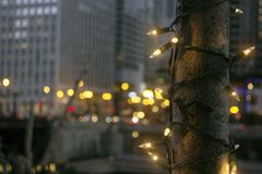Christmas lights decorate a tree. In Chicago downtown near river north royalty free stock images