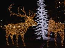 Christmas lights in Esplanade Park Royalty Free Stock Photo