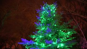 Christmas lights are lit on the trees, in the night sky, camera movement. Tree decorated with Christmas lights, tall tree lights, view from below, 2018 stock video footage