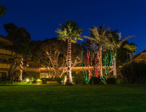 Christmas lights on palm trees Stock Photography