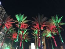 Christmas lights on palms trees. Southern style of Christmas decoration royalty free stock photography