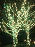 Christmas lights. Pretty Christmas trees Stock Image