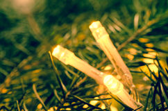Christmas lights on spruce twig Stock Images