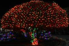 Christmas lights on tree. Tree with color Christmas lights Stock Photography