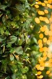 Christmas lights and tree backdrop stock photo