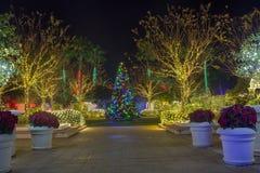 Christmas Lights and Tree Stock Photos
