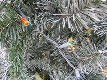Christmas lights on tree Royalty Free Stock Photography