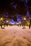Christmas lights on trees in Tallinn, Estonia Royalty Free Stock Photography