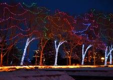 Christmas Lights On Trees In Edmonton Alberta. Christmas lights on trees at the Legislative Grounds at Christmas time in Edmonton Alberta stock photos