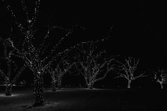 Christmas lights on trees in Victoria, BC, Canada at night. Black and white with some grain Stock Image