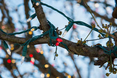 Christmas lights wrapped around a tree branch Royalty Free Stock Photography