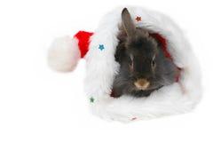 Christmas lion rabbit 2 stock photography