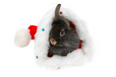Christmas lion rabbit 3 Stock Photo