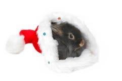 Christmas lion rabbit stock photo